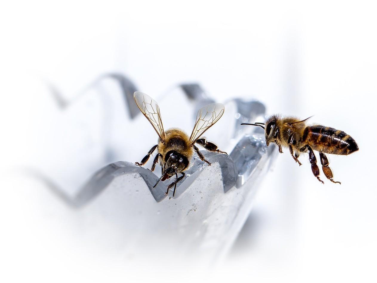 Качественный мёд и продукты пчеловодства в СПб и Ленобласти